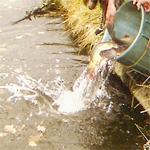Forschungsprojekt Besatzfisch