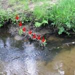 Ufersicherung - Instream Restaurieren