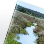 Pflanzen und ihre Bedeutung für Fließgewässer – Praxistipps