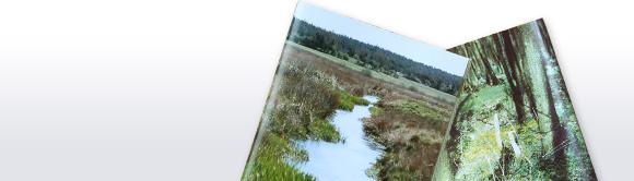 Pflanzen und ihre Bedeutung für Fließgewässer - Praxistipps
