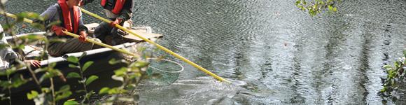 Elektrofischerei Ebefischung
