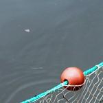 Zugnetzfischerei – Erste Erfahrungen