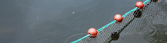 Zugnetzfischerei - Erste Erfahrungen