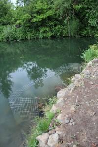 Wasserpflanzen einsetzen - Schutz