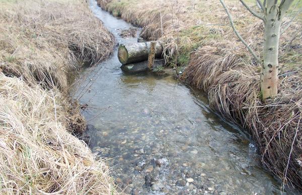 Renaturierung kleiner Fließgewässer mit ökologischen Methoden - Stammbuhne