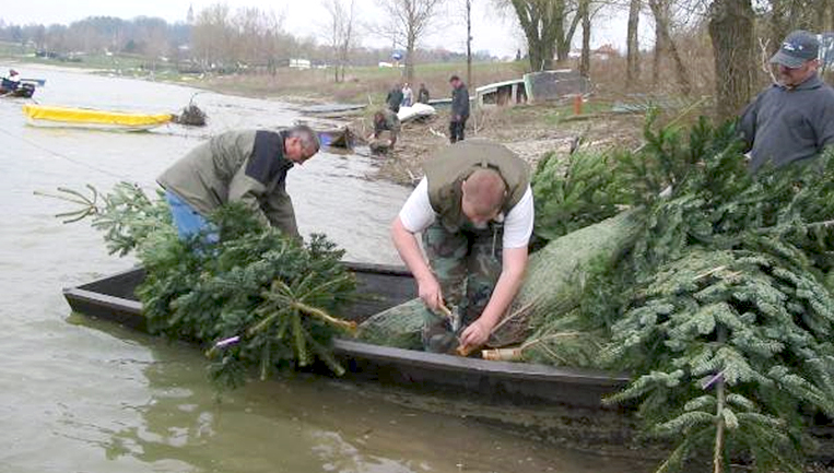 Zandernester - Tannenbäume im Boot