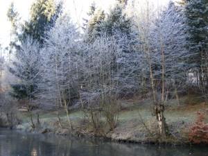 Gewaesserwart Erfahrungen - Teich