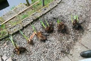 Ruhrgeschichten - Pflanzen